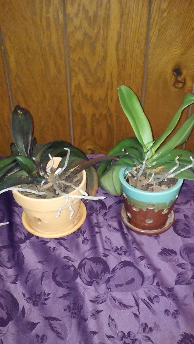 repotted orchids 0917