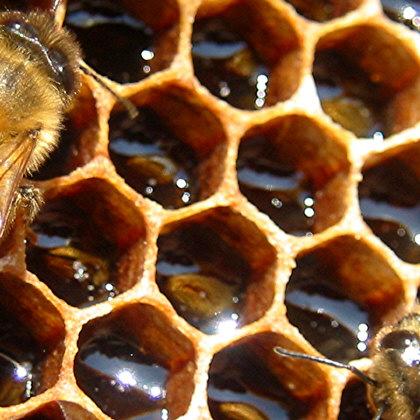 honeycomb100817