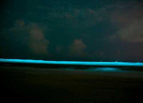 fe2f681c-bioluminescence-lights-up-the-shoreline-at-night-500x360