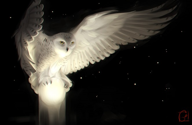 owl glowing