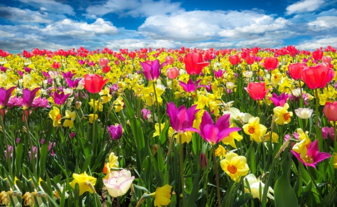 dorothy's flowers