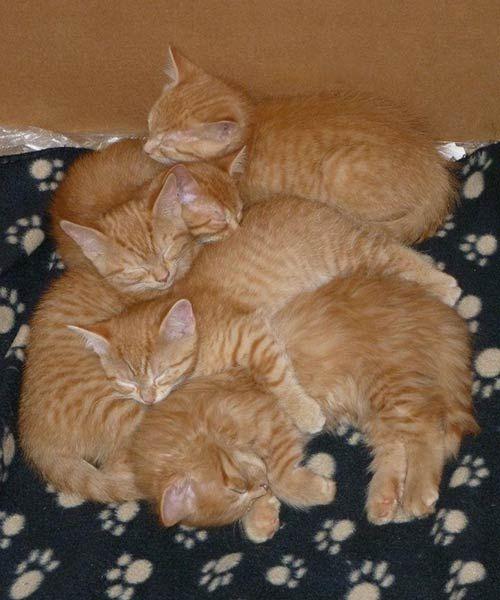 mama cat kittens