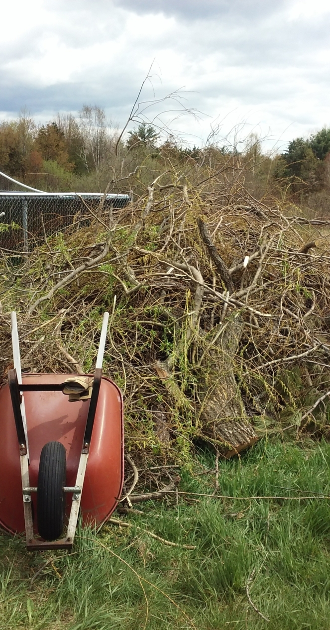 brushpile and wheelbarrow 051319
