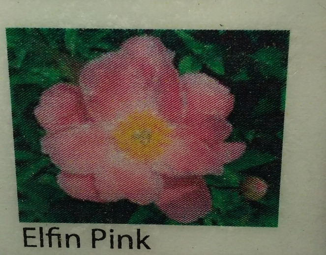 peony pink so frangrant label
