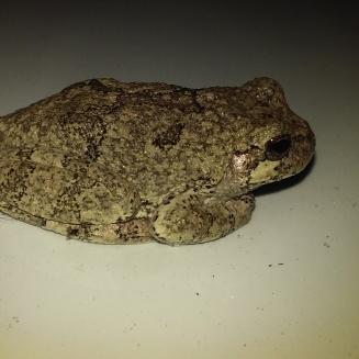 frog side