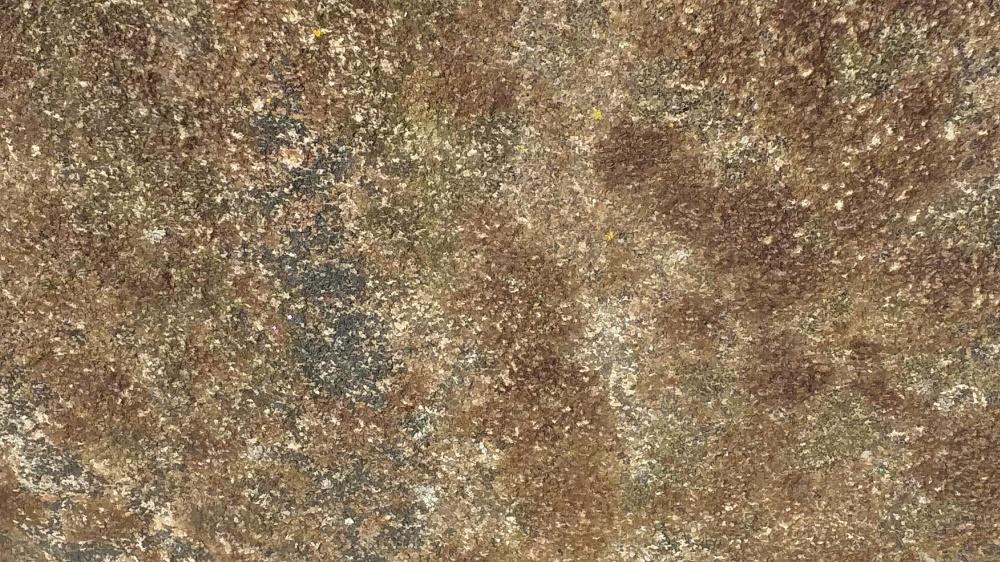 lichen 1 091619