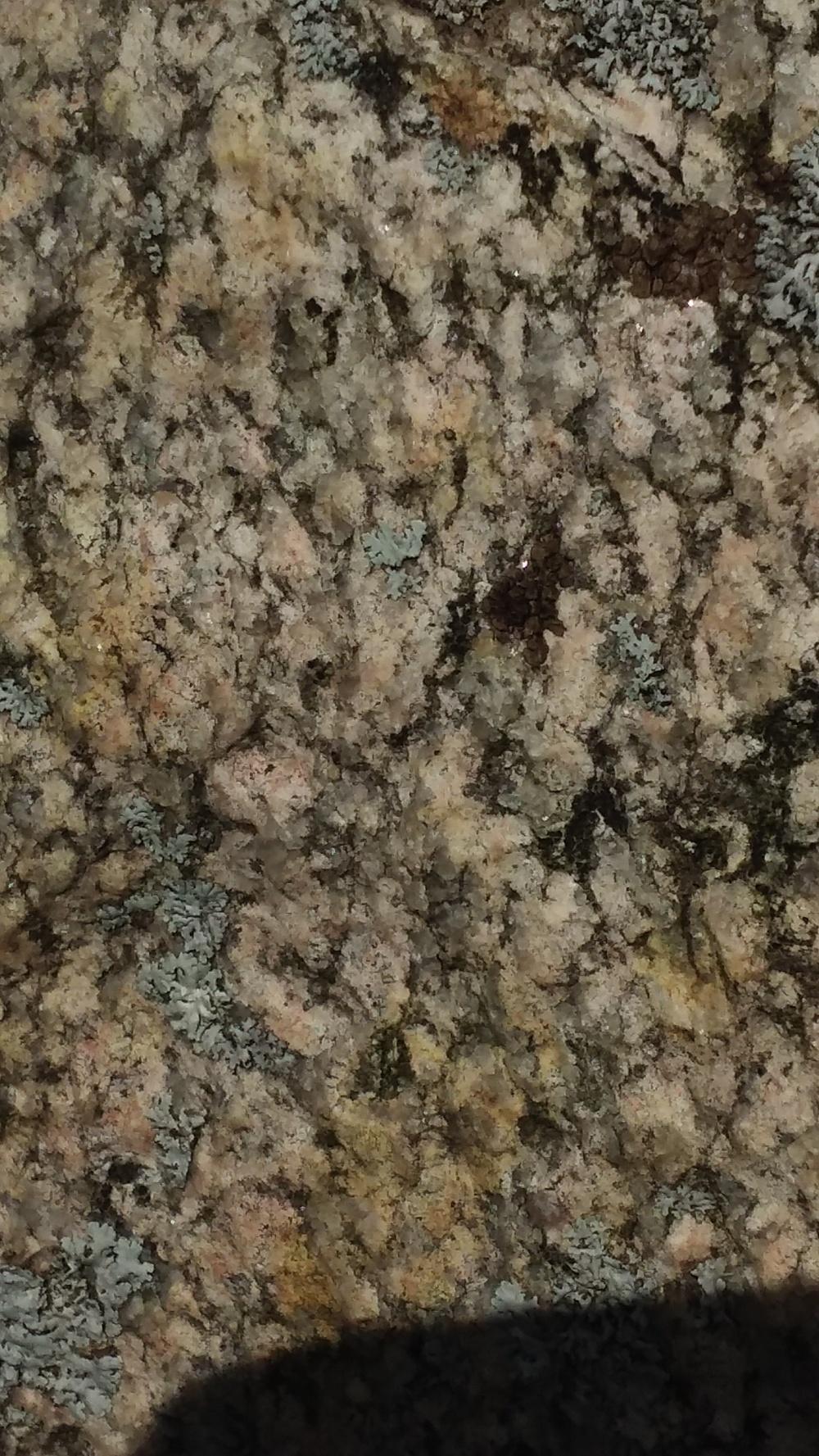 lichen 3 091619