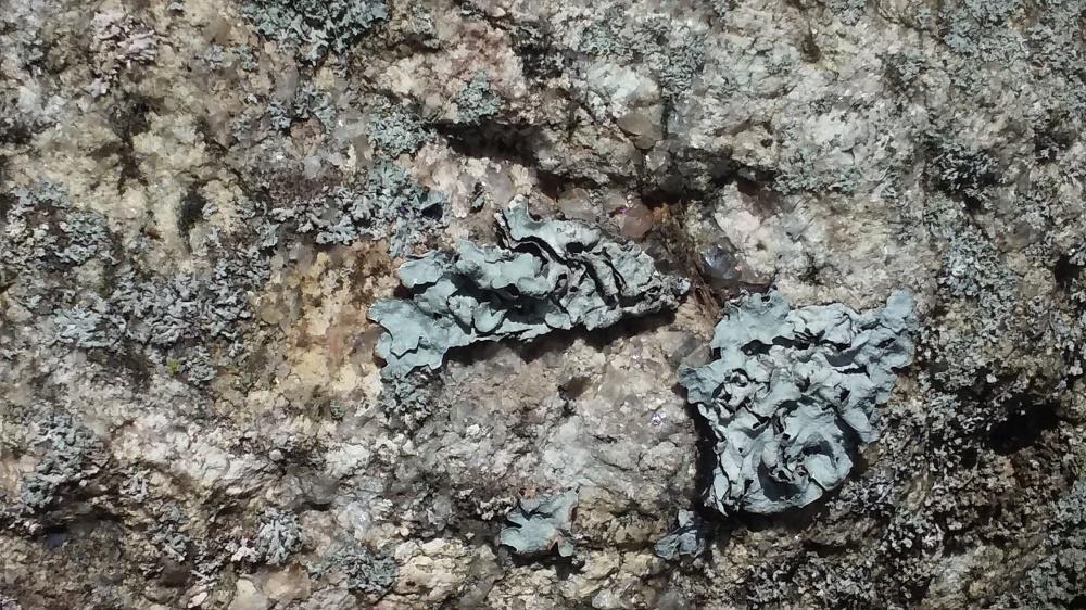 lichen 4 091619