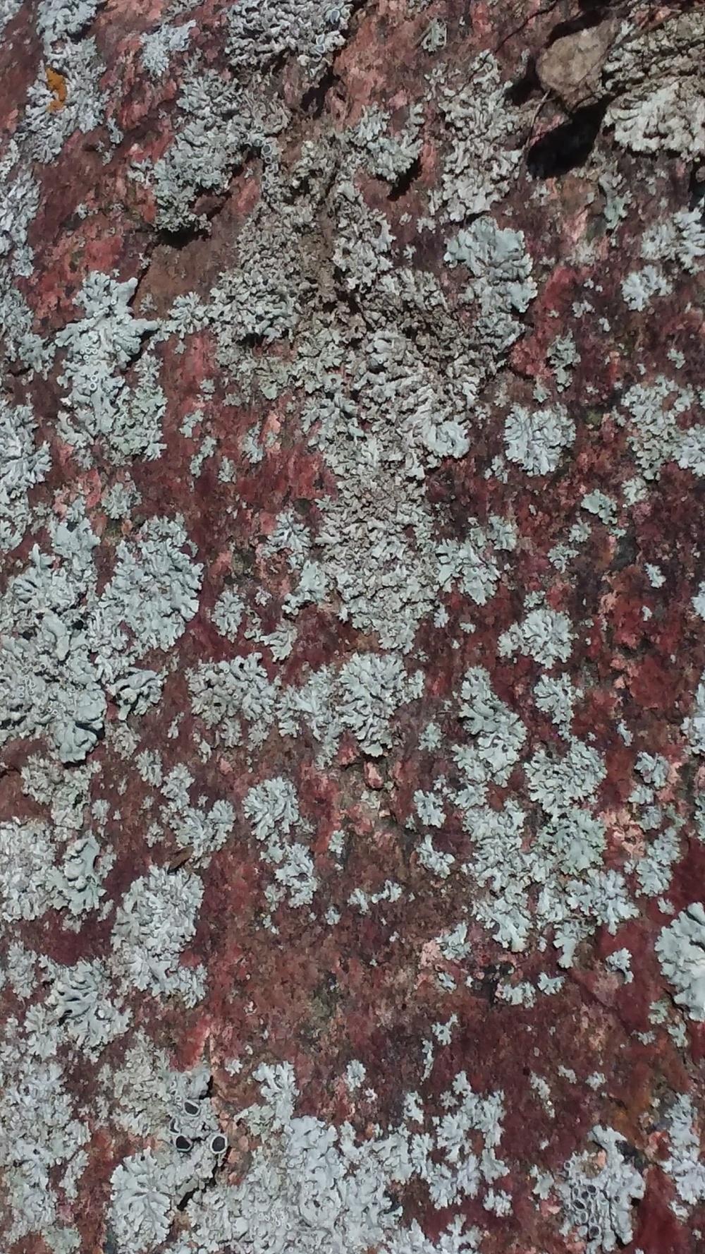 lichen 5 091619