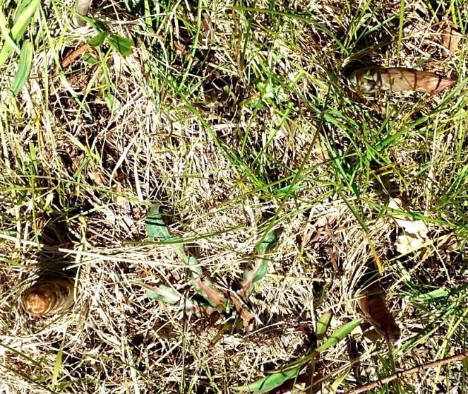 asparagus stalks scaled down