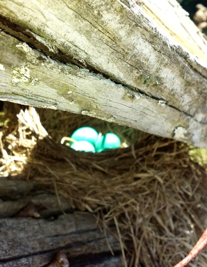 robin nest scaled down