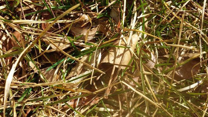 grass greening 032121 resized