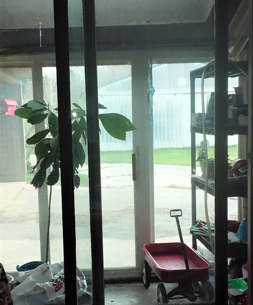 mini greenhouse 042621
