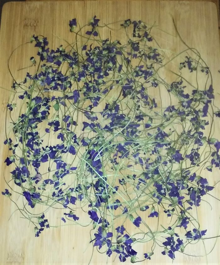 resized drying violets on board 051221