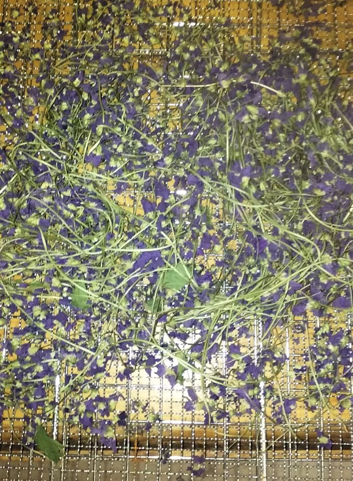 resized drying violets on screen 051221