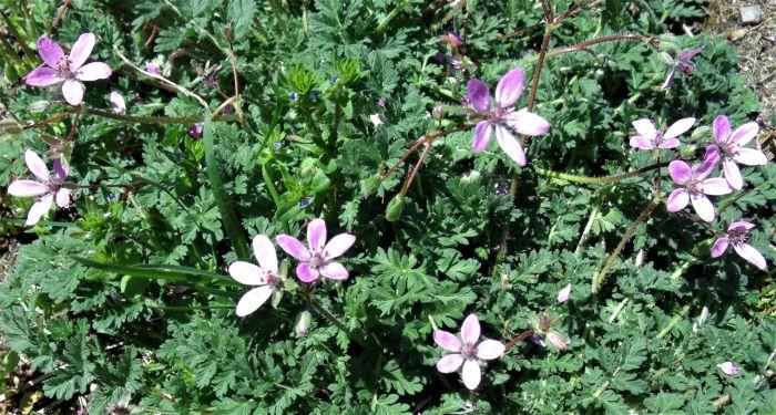 resized wildflowers 050521 GEDC1240 (2)