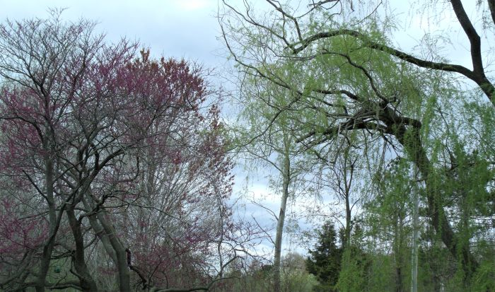 resized willow and redbud friends 050821