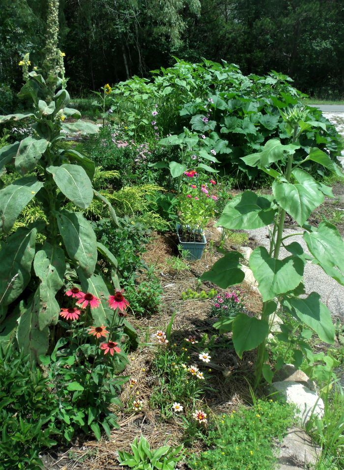 resized curve of garden 071321