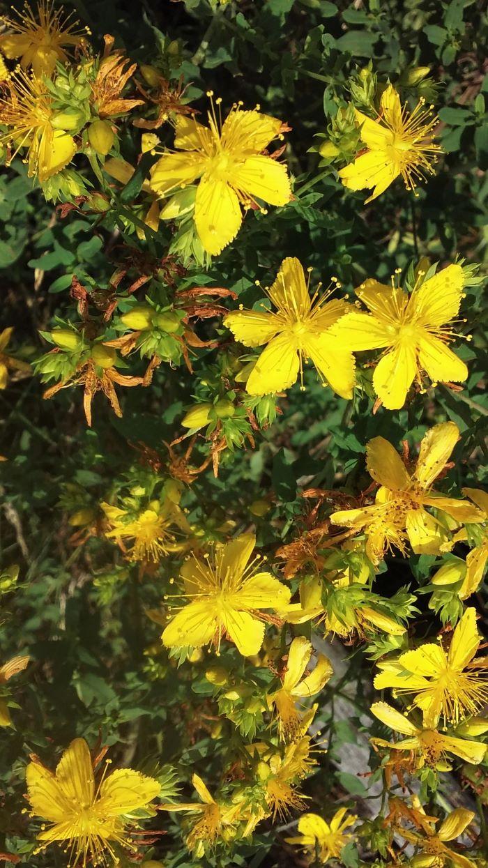 resized yellow flowers 070221