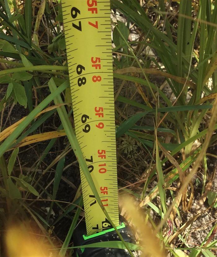 resized measuring tape bottom 081821