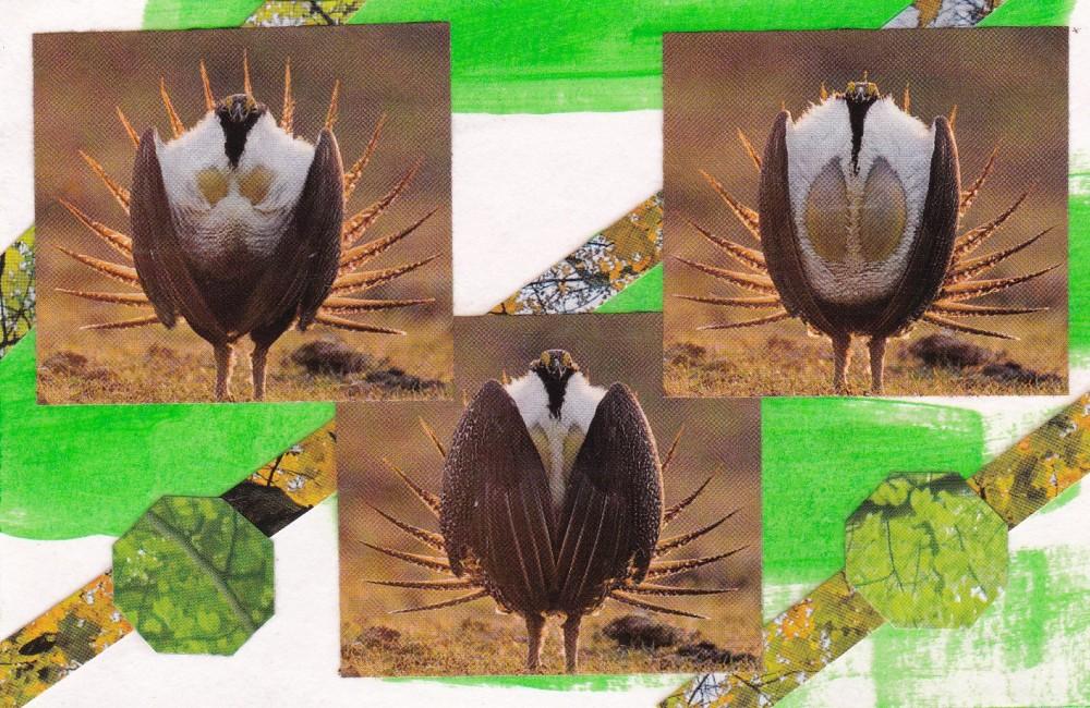 green 3 grouse