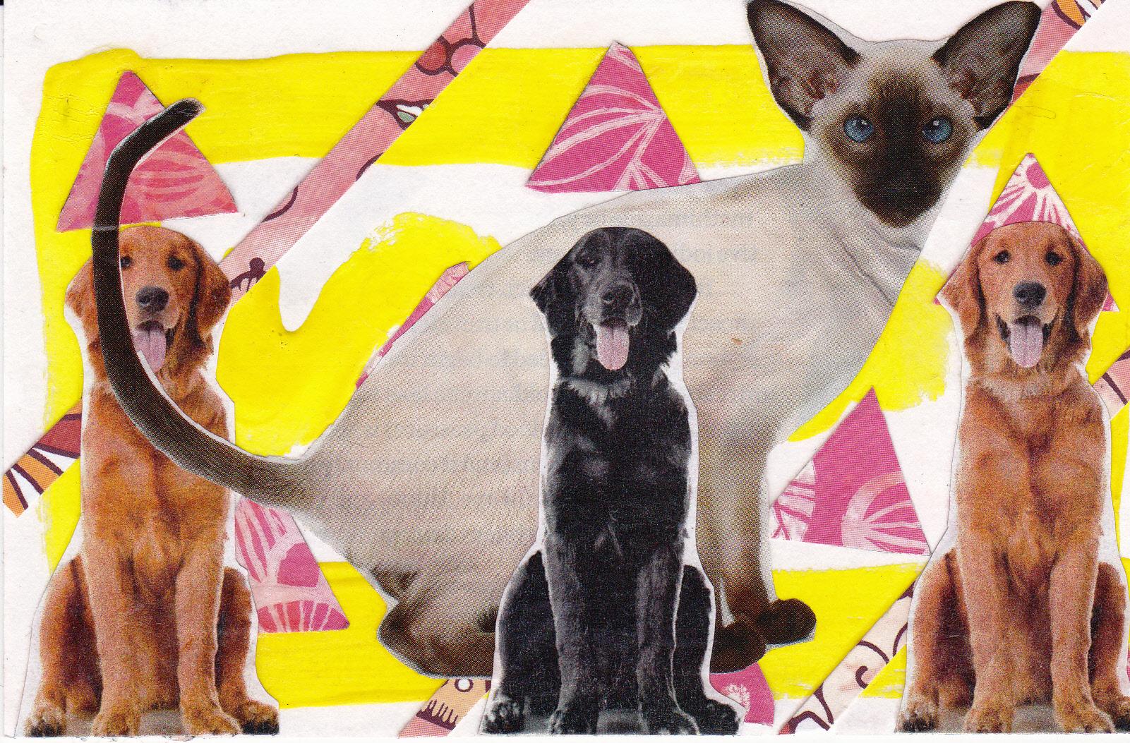 yellow 3 dogs 1 cat