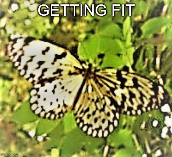 Getting Fit Banner 100821