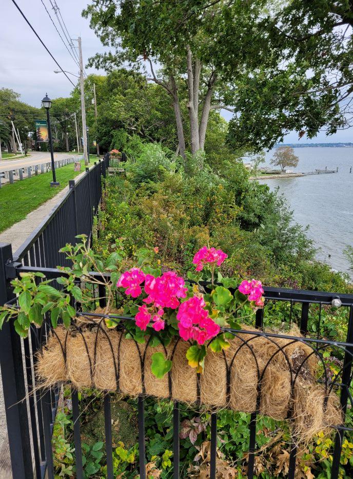 resized flowers along memorial drive 100221